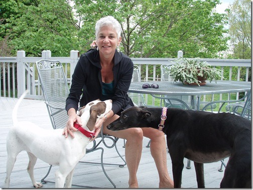 pointer and greyhound
