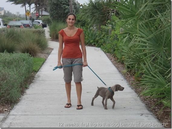 Ginger Juno Beach, FL
