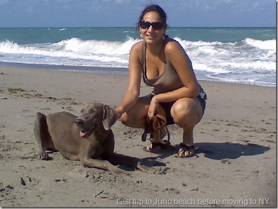 Ginger Juno dog Beach