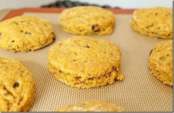 Pumpkin Scones with Chocolate Chips