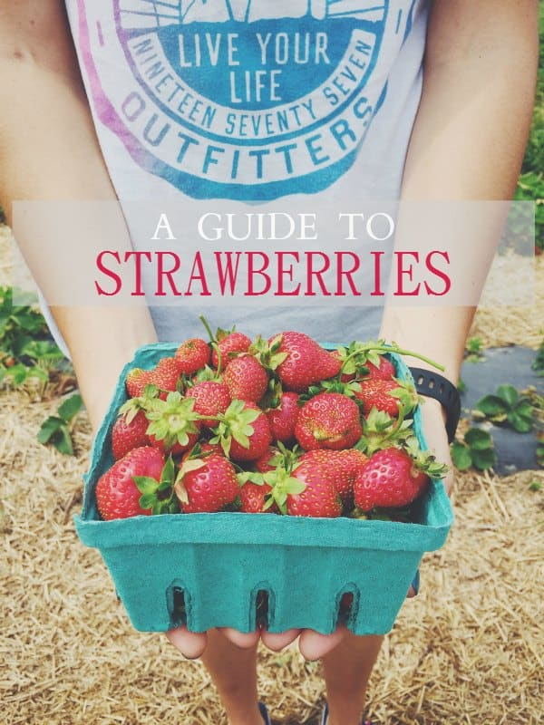 A Guide To Strawberries