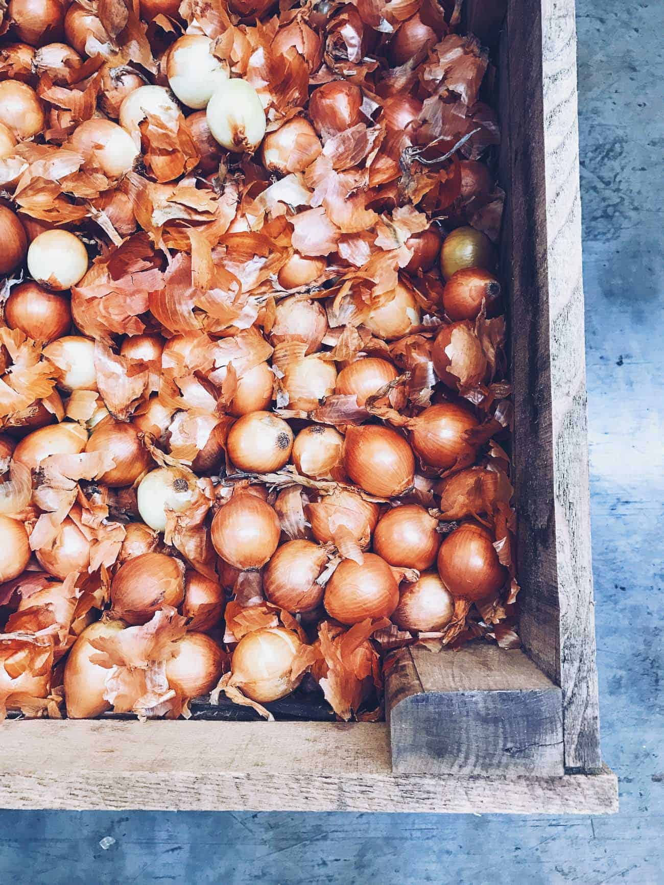 Yellow onions at Minkus Farm