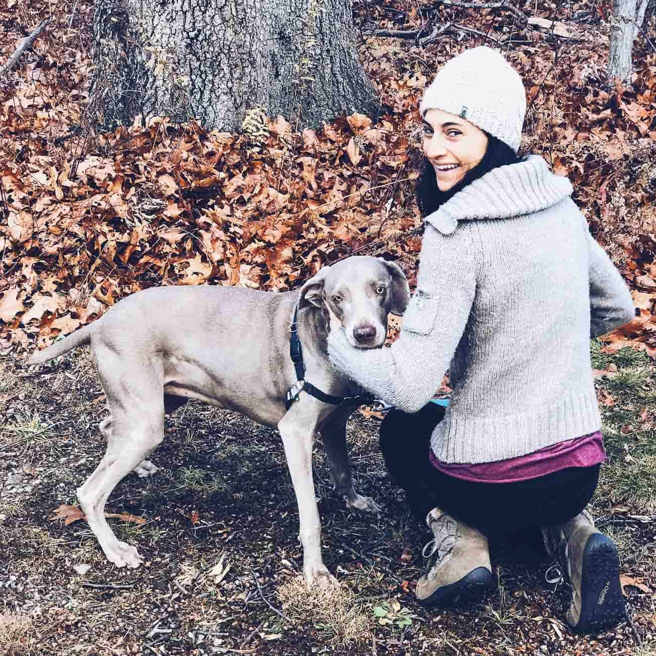 A day of hiking with weimaraner