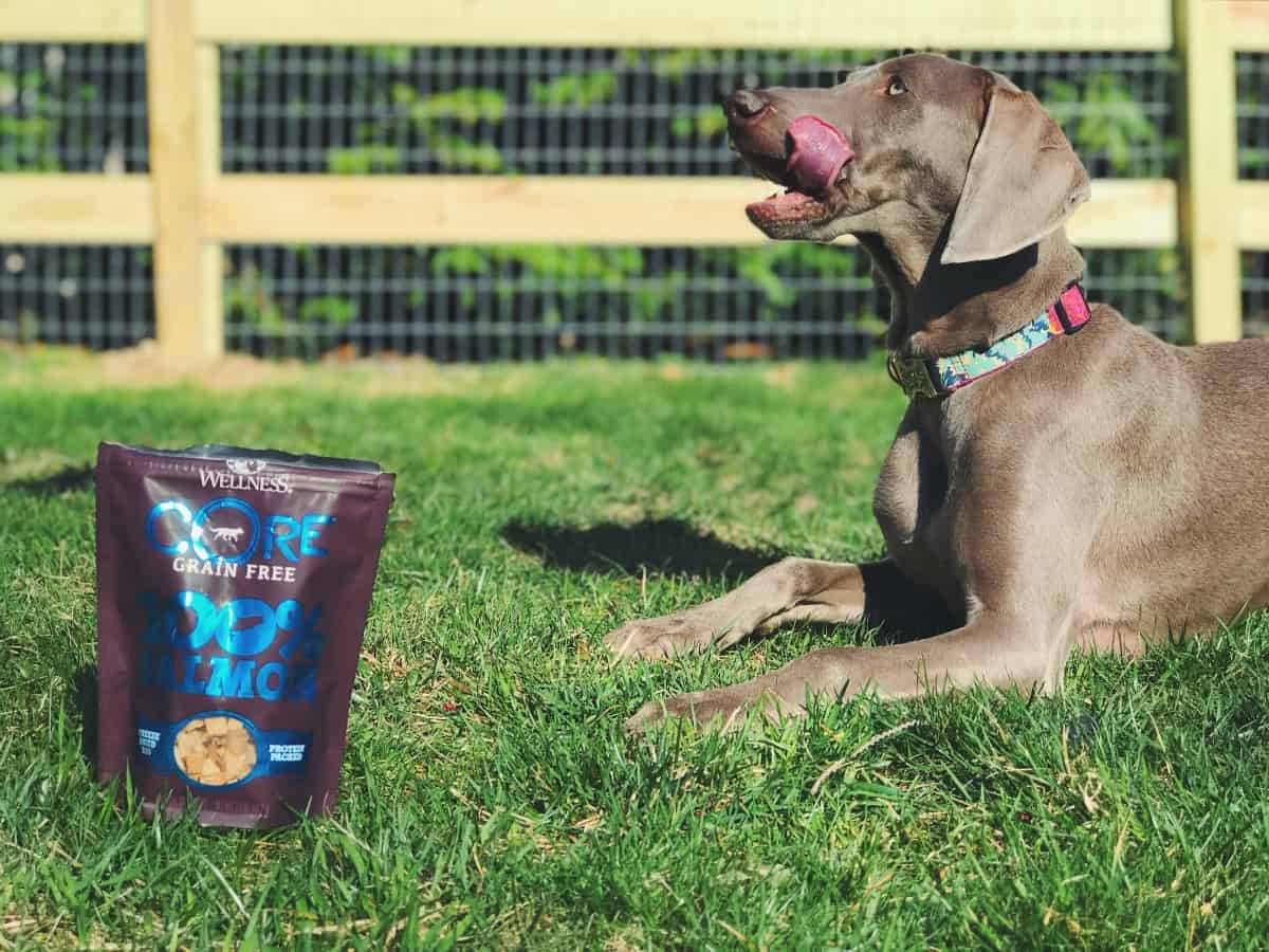 Wellness CORE RawRev 100% Freeze Dried treats - salmon