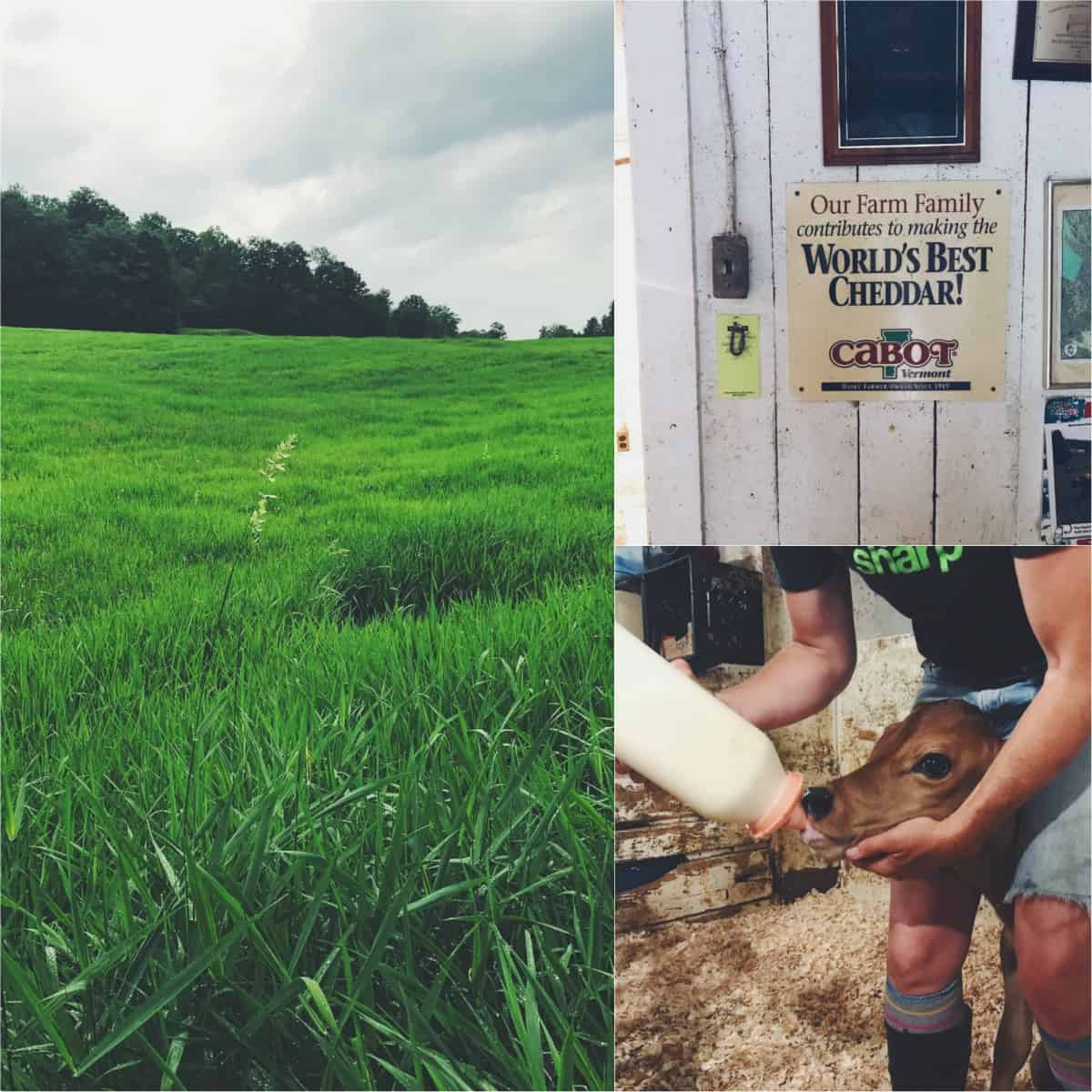 Scenes from Richardson Farm in Woodstock, VT